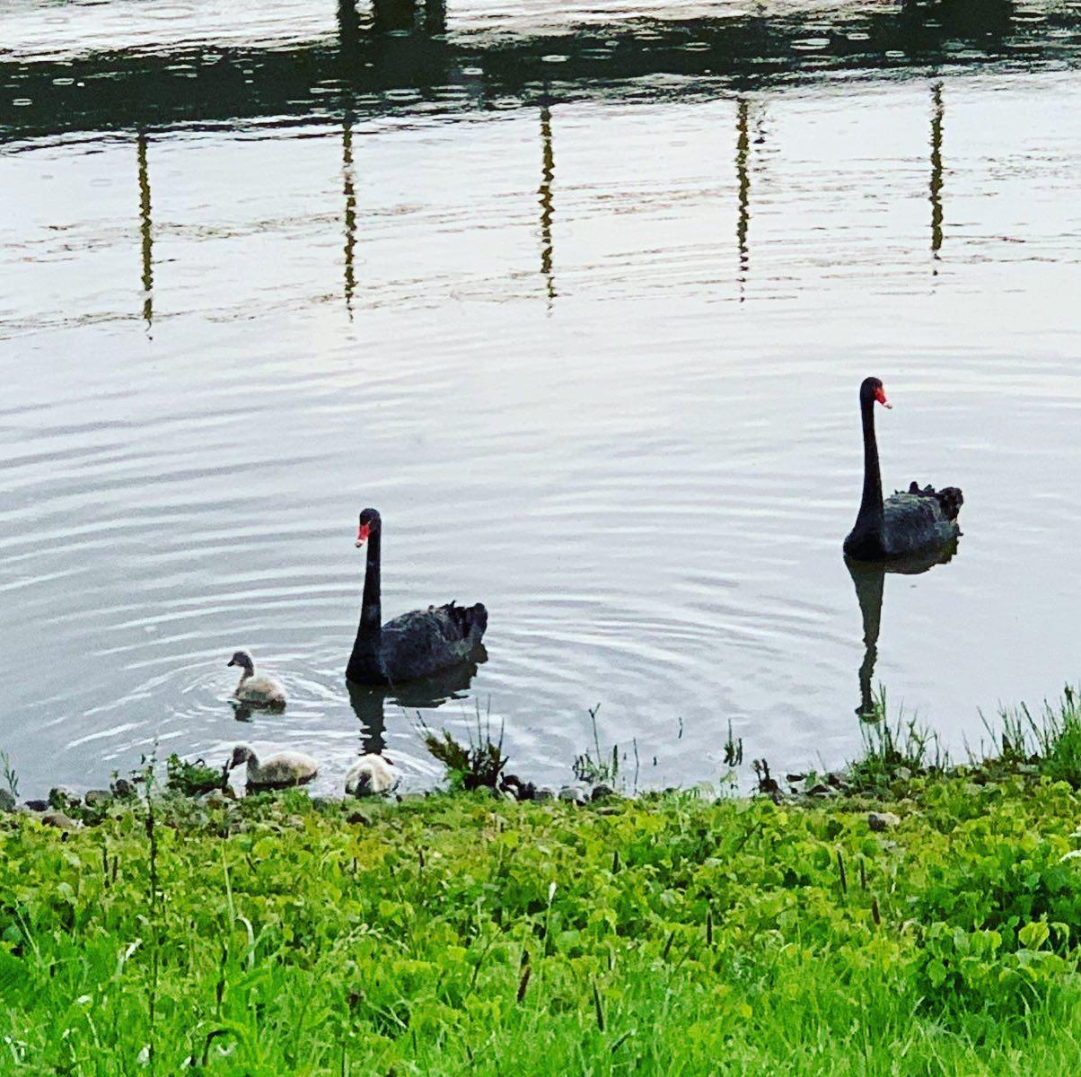 Lente bij ons op de Maas …
